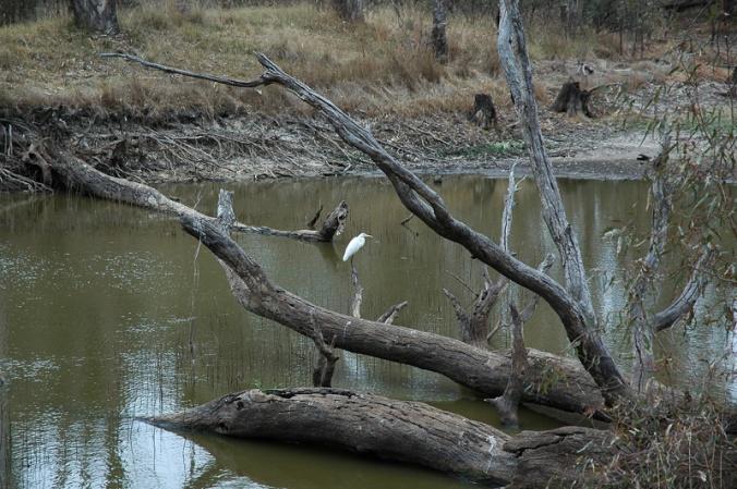 heron-and-billabong
